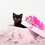 adorable black kitten in pink gift box presents with bows