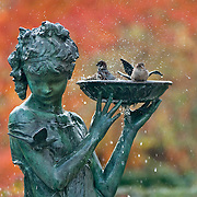 A sparrow takes a bath bath at the Secret Garden Fountain in Central Park, New York City