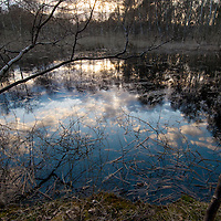 A small forest pond popular among the toads.<br /> Location: Skanör, Sweden