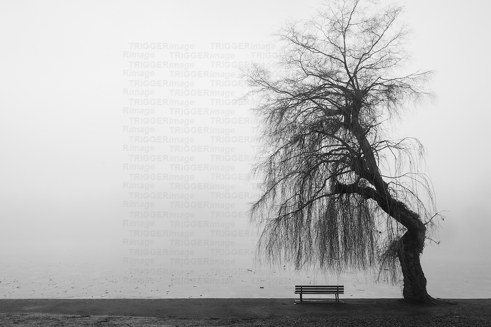 A lone park bench beside a twisted weeping willow tree in the fog.