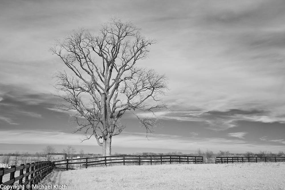 Winter tree outside of a horse pasture in rural Kentucky.  Infrared (IR) photograph by fine art photographer Michael Kloth. Black and white infrared photographs