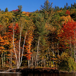 Saco River.   White Mountain N.F.  Fall foliage.  Bartlett, NH