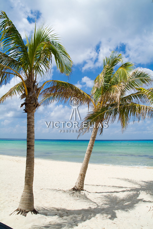 Palm trees on the beach..Cozumel, Q.Roo..Mexico.