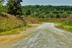 Remote gravel road in Banner Marsh