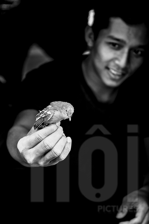 Man holds a tiny bird in his hand, Yogyakarta, Indonesia, Southeast Asia