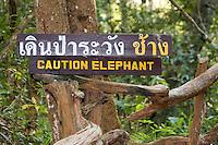 Caution Elephant Sign, Thailand