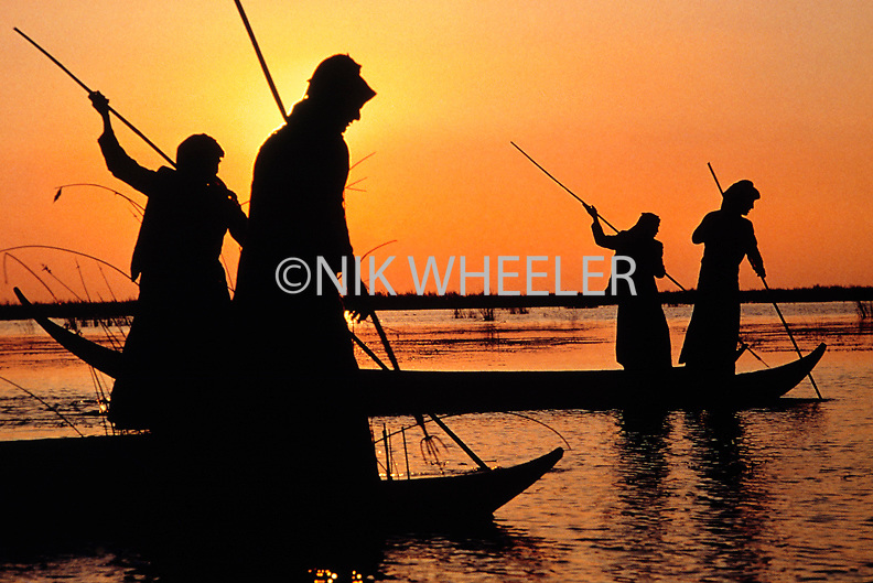 Marsh Arabs fish with spears from their canoes at sunset in the Iraqi Marshes of Southern Iraq