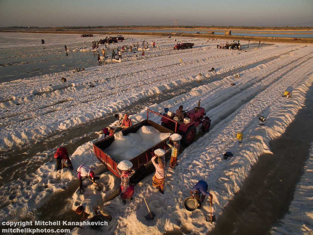 Salt workers in salt pans around Dwarka, Gujarat, India.