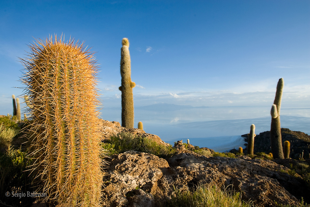 Cacti on a cliff overlooking salf flats in Bolivia
