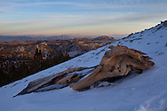 As the days last light leaves the Nevada desert, a bristlecone log lies in the shadow of the White Mountains, CA