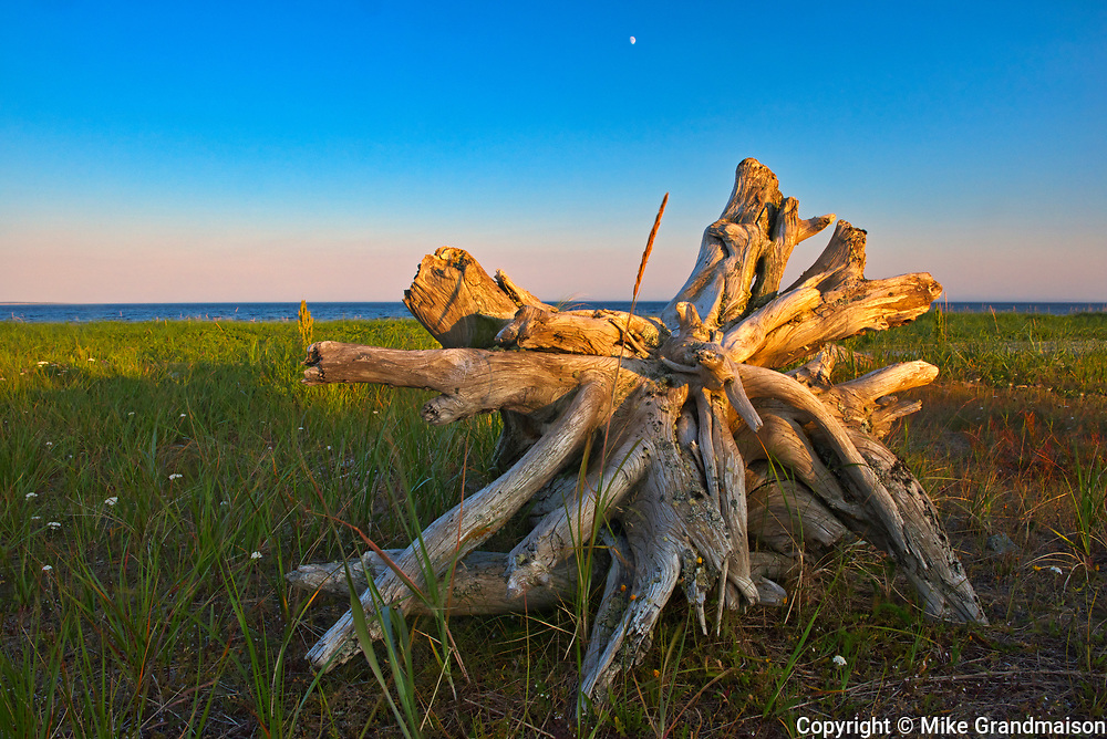 Driftwood along the North Shore of the Gulf of St. Lawrence<br />Longue-Pointe-de-Mingan<br />Quebec<br />Canada