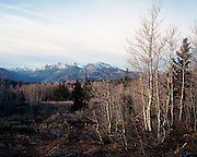 Aspen groves and Silver Peak, as seen from Monitor Pass, Sierra Nevada mountains, California
