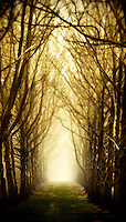 Lisa Johnston | lisa@aeternus.com | Tiwtter: @aeternusphoto  Sycamore trees in Center Valley, PA