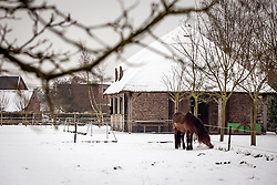 Rottiers Stijn (BEL) -<br /> Reportage Stal Rottiers - Bornem 2013<br /> © Dirk Caremans