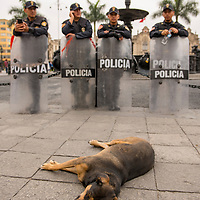 Local police officers stand guard next to a sleeping dog in the Plaza Mayor, or main square, of Lima, Peru.