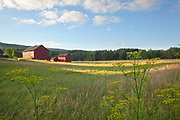 Red barns near Great Barrington, MA.