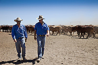 Brunette Downs Cattle Station is situated on the Barkley tablelands in Australia's Northern Territory. One of Australia's largest cattle stations..Sam Burke son of station mananger Henry with Anthony Cox assistant mananger  in the drafting yards,