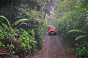 Munro Trail on Mt. Lana'ihale, with Jeep coming down road through forest; Lanai, Hawaii.