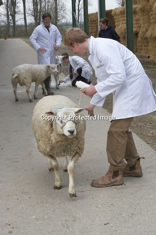 5th April 2014<br /> Bishop Burton College Stockmanship Day 2014