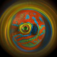 Gulen fish round images