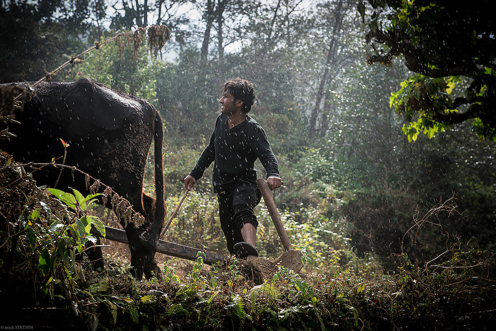 — A light rain falls as Durga Beekae maneuvers his oxen through the fallow land, preparing it for the seasonal sowing of wheat or rice. Durga is one of the few youth who have remained in his village, choosing to follow the traditions of his ancestors instead of working abroad.