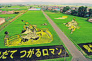 """Rice field Art or Tambo Art.<br /> In northern Japan the small village of Inakadate plants five different varieties of rice all different colours to produce.   """"Rice field art""""<br /> <br />  This is an annual event and attracts many thousands of tourists. Every year in autumn they have a different subject matter to be viewed. <br /> <br />  The design is done by an artist and then in a computer the design is calculated and adjusted to what it would look like when it is viewed from the town hall watch tower. Then the design is marked out in the rice fields."""