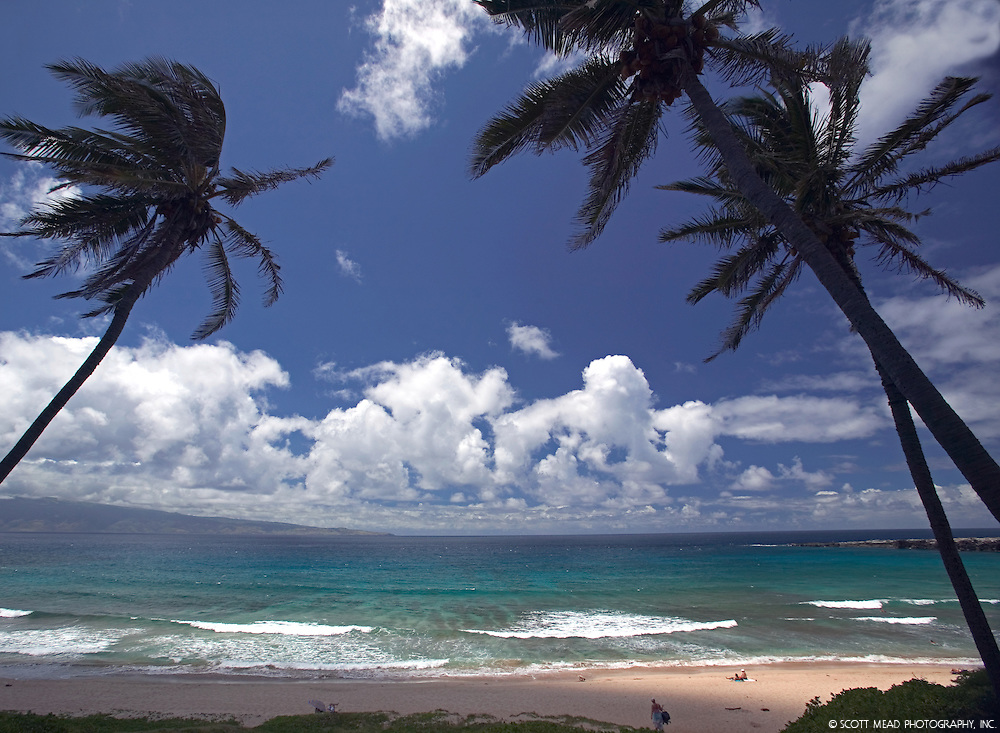 View of Oneloa Bay between palm trees, Molokai in background, Kapalua, Maui, Hawaii