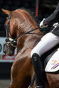 Diederik van Silfhout - Expression<br /> Selectie WK Jonge Dressuurpaarden tijdens NK Dressuur 2015<br /> © DigiShots