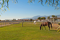 Horses grazing in private ranch