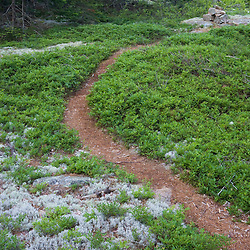 A forest trail in Acadia National Park Maine USA