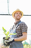Male gardener looking away while holding potted plant at greenhouse