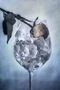 a withered rose in a glass full of ice cubes