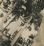 """Japanese Vernacular or """"Found Photograph"""": <br /> <br /> Picking coconuts<br /> 1930s<br /> Anonymous<br /> <br /> - Vintage original gelatin silver print. <br /> - Size: 2 1/4 in. x 2 1/4 in. (56 mm x 56 mm).<br /> <br /> Price ¥5000 JPY<br /> <br /> <br /> <br /> <br /> <br /> <br /> <br /> <br /> <br /> <br /> <br /> <br /> <br /> <br /> <br /> <br /> <br /> <br /> <br /> <br /> <br /> <br /> <br /> <br /> <br /> <br /> <br /> <br /> <br /> <br /> <br /> <br /> <br /> <br /> <br /> <br /> <br /> <br /> <br /> <br /> <br /> <br /> <br /> <br /> <br /> <br /> <br /> <br /> <br /> <br /> <br /> <br /> <br /> <br /> <br /> <br /> <br /> <br /> <br /> <br /> <br /> <br /> <br /> <br /> <br /> <br /> <br /> <br /> <br /> <br /> <br /> <br /> <br /> <br /> <br /> <br /> <br /> <br /> <br /> <br /> <br /> <br /> ."""
