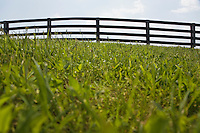 Fence in a grassy field