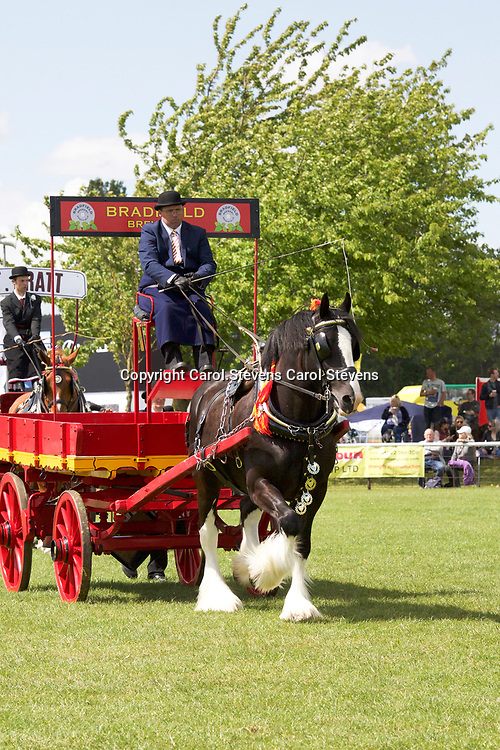 Notts County Show 2017<br /> Heavy Horse Single Trade Turnouts