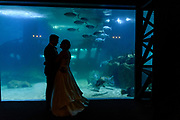 silhouette bride and groom at cleveland aquarium windows on the river wedding photo by Tallmadge wedding photographer, Akron wedding photographer Mara Robinson Photography