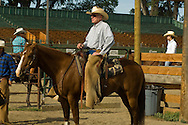 Tom McGuane, author, competes in cutting horse competition, Big Timber, Montana, Quarter Horse, Hard Hat Harry