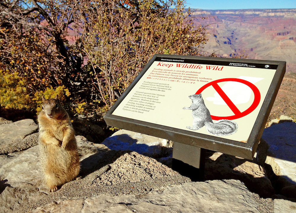 A squirrel poses in a cute way as it begs for handouts of food from tourists visiting a National Park.