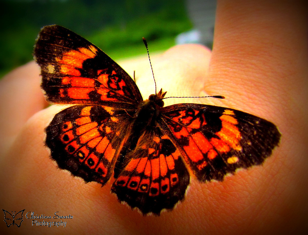 Orange Butterfly in hand image for sale
