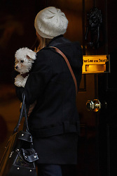 © licensed to London News Pictures. London, UK 05/12/2013. George Osborne's Bichon Frise dog called Lola going at the Number 10 in Downing Street on Thursday, 5 December 2013 ahead of the autumn statement. Photo credit: Tolga Akmen/LNP