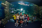 Darling Harbour. Sydney Aquarium. Sharks, rays and other fish. Tourists taking souvenir photos.