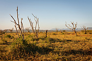 Photo overlooks a hot and dry patch of the South African bush.