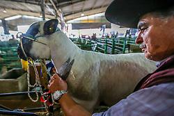 Pavilhão dos Ovinos durante a 38ª Expointer, que ocorre entre 29 de agosto e 06 de setembro de 2015 no Parque de Exposições Assis Brasil, em Esteio. FOTO: André Feltes/ Agência Preview