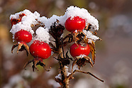 Vruchten en bessen   Fruit and berries