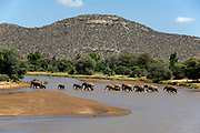 African Elephants crossing the river Ewaso N'giro in Samburu NP, Kenya.