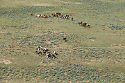 Aerial photos of wild mustangs in Wyoming