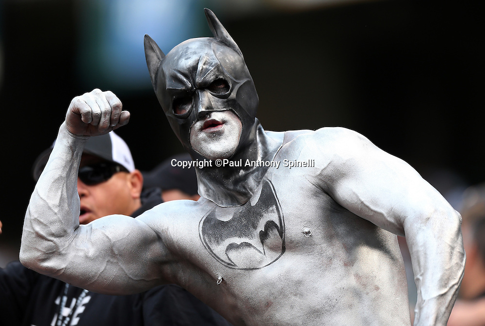 An Oakland Raiders fan with a Batman face mask and  colored body paint flexes his biceps muscles during the NFL week 11 football game against the New Orleans Saints on Sunday, Nov. 18, 2012 in Oakland, Calif. The Saints won the game 38-17. ©Paul Anthony Spinelli