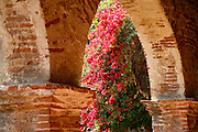 Bougainvillea In The Arch Of the North Corridor at the Historic Mission San Juan Capistrano, Orange County, California