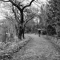 Lone person with umbrella walking along nature path, trees with bear branches, reflection in body of water.