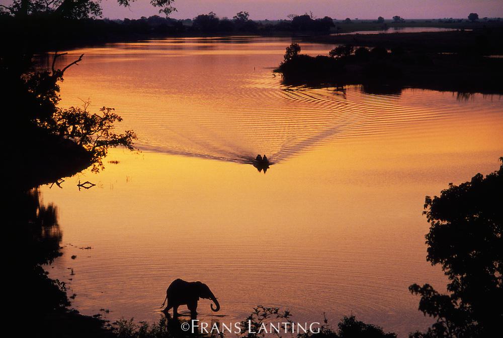 Tourists approaching elephant, Chobe National Park, Botswana
